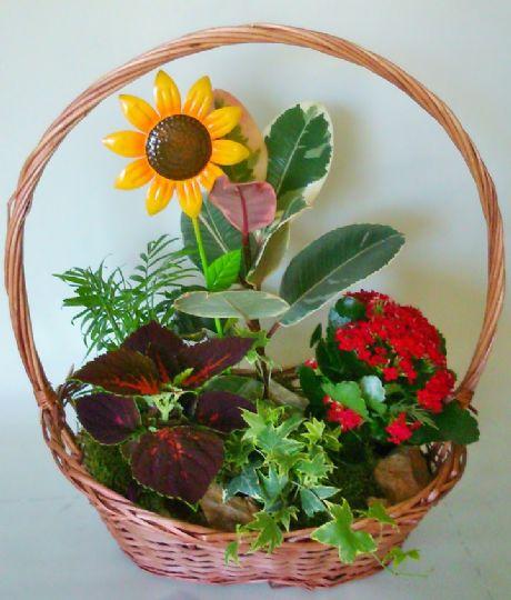 plantas de interior con flores para regalar
