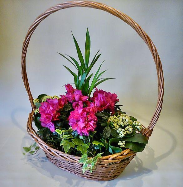 Cesta con plantas para regalar - Plantas pequenas para regalar boda ...