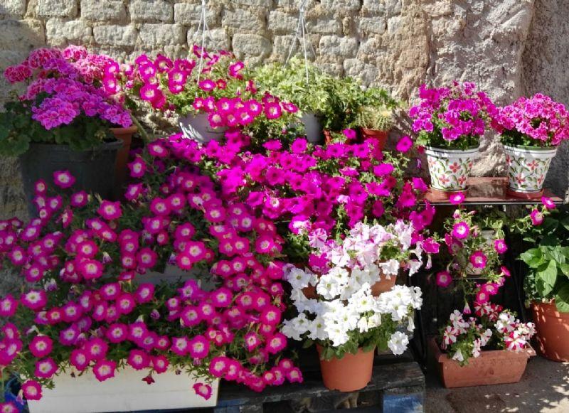 8 flores de verano y plantas resistentes al calor for Plantas de exterior resistentes
