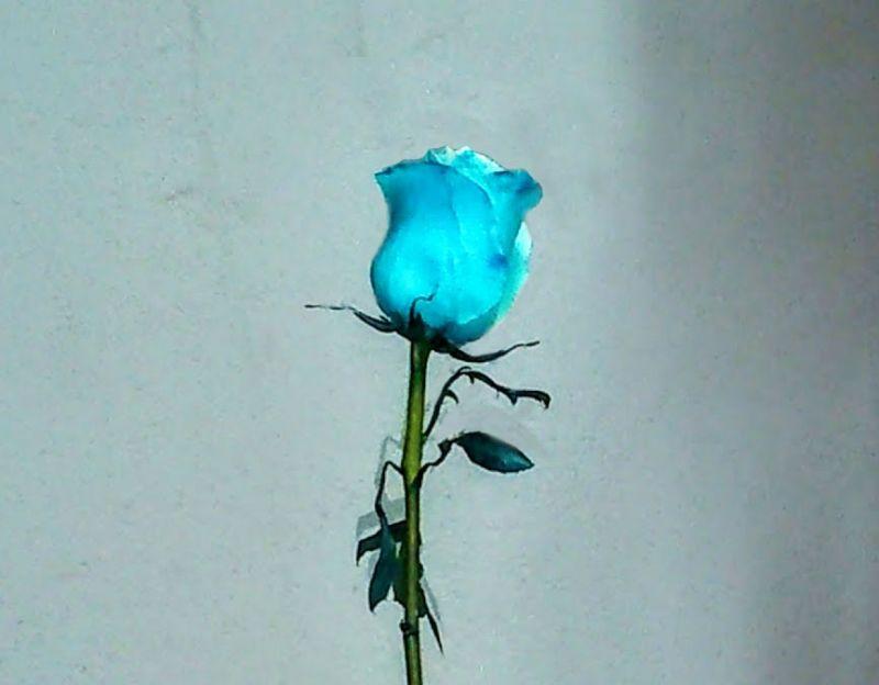 Ramos Y Centros De Flores Con Rosas Azules