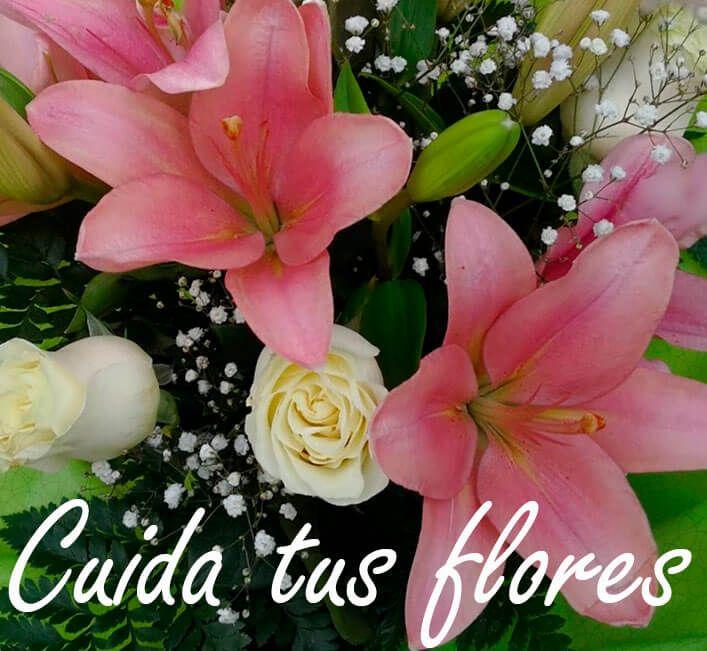 Florister A Low Cost Env O De Flores A Domicilio Baratas